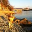 Boa am Rhein