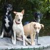 Koda, Boa, Juca & Shanouk