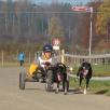Dog-Cart Rennen Lupfig 2011