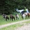 Hundelager 2012