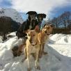 Mein 4-Hunde Team nach dem Rennen in Splügen