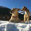 Boa & Juca geniessen die Sonne