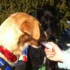 Glace für Hunde