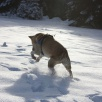 Winterspaziergang im Jura
