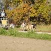 4-Hunde mit Shanouk, Boa, Susi & Strolch