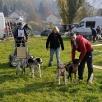 Start 4-Hunde-Team