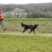 Lea Mina mit Fingal auf dem 6.Platz CaniCross Junior 2,8km