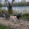 Ilka mit Koda & Boa auf dem 2. Platz Dog-Cart 2-Hunde