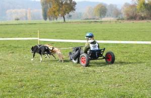 Koda & Boa Dog Cart 2-Hunde
